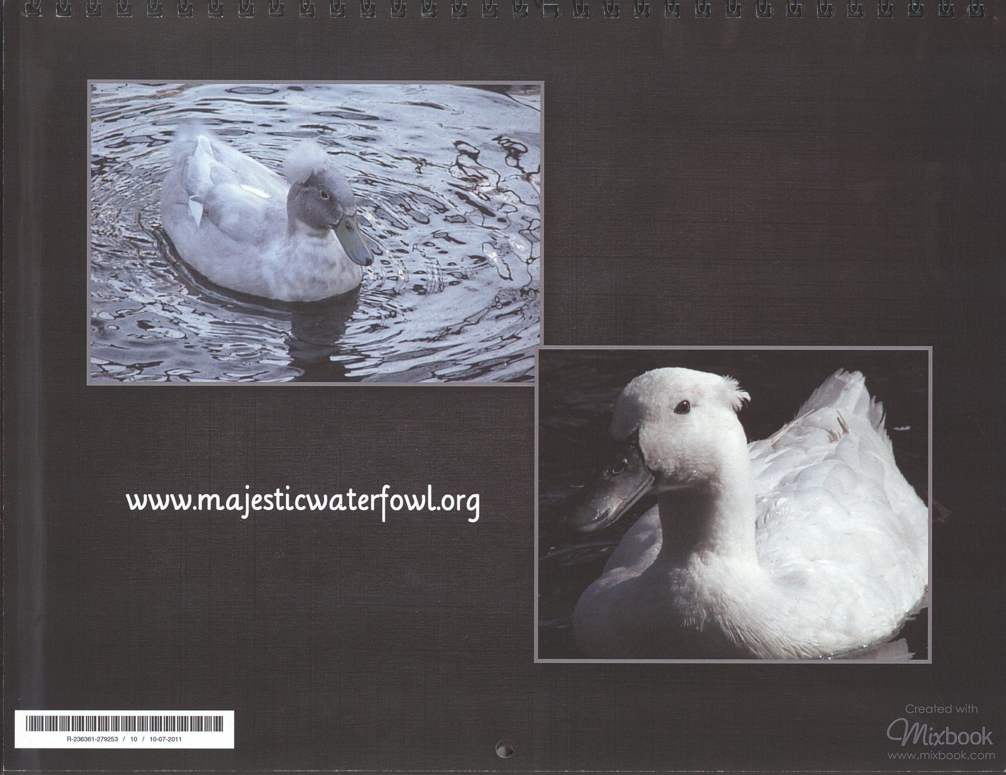 Llc Gross Receipts Tax Word Majestic Waterfowl Sanctuary  Newsletter  The Majestic Monthly  Paypal Send An Invoice with Rental Receipts Template Pdf Click On Images For Larger Views Toys R Us Returns Without Receipt Pdf