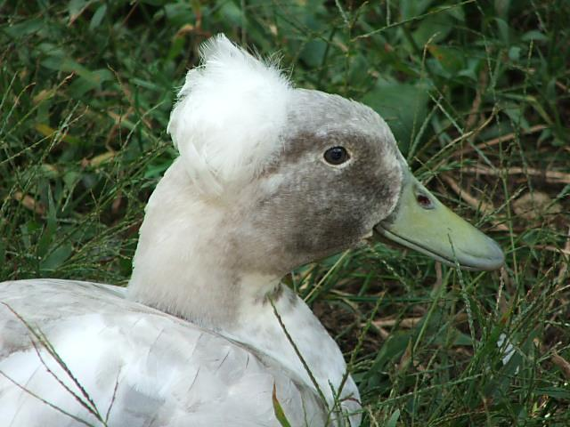 Majestic Waterfowl Sanctuary - Newsletter - The Majestic