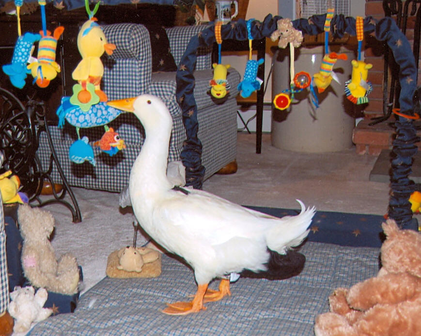 Majestic Waterfowl Sanctuary - Newsletter - The Majestic Monthly ...